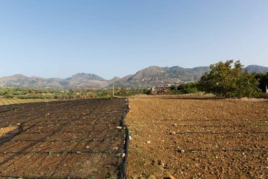 蓝冠机械网首页菲亚特动力科技和 SLOW FOOD (慢食)支持可持续食品生产社区