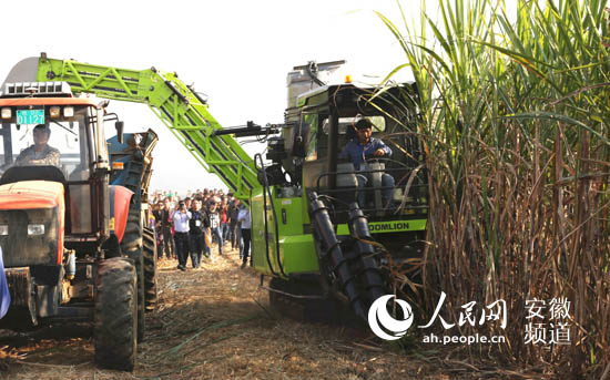 创新引领 中联重科甘蔗收获机在广西大量上市