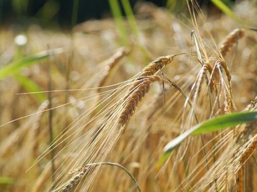 """疫情或触发全球粮食危机,我国72万农机企业备战""""春耕"""""""