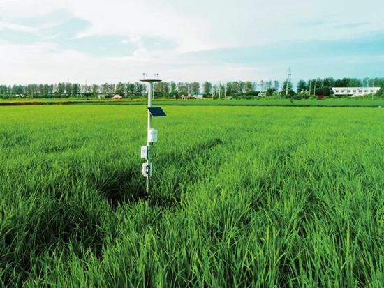 中联农机:拿着手机种水稻